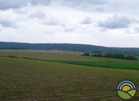 Działka rolna Radwanowice 52ar